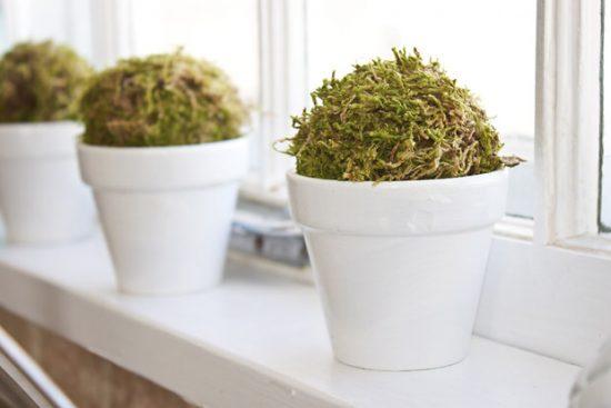 moss spheres