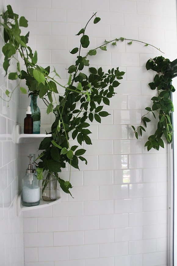 Plants-in-shower