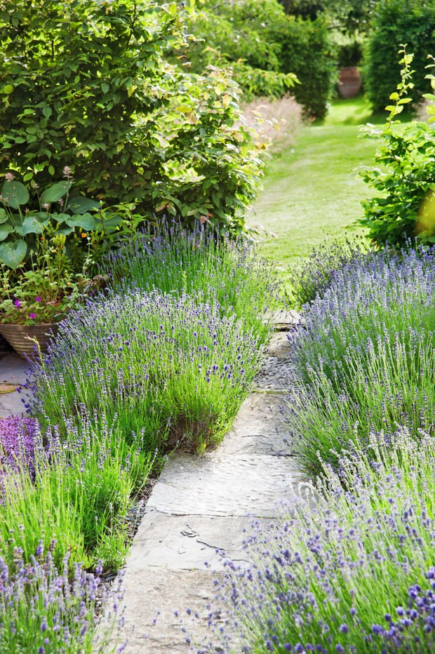 Spruce your garden-2