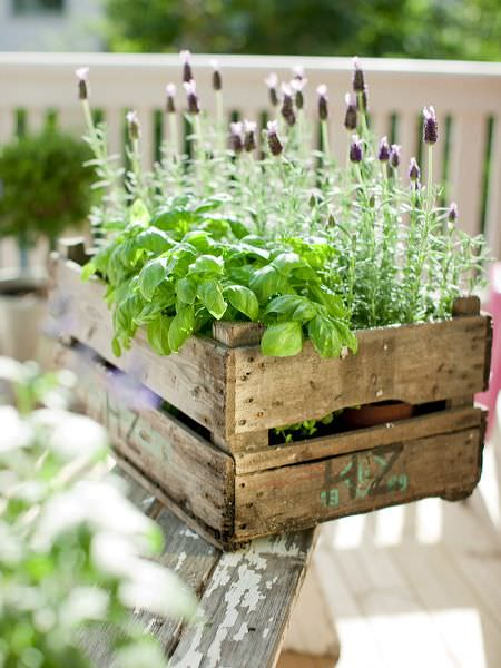 Budget outdoor planters-12